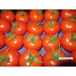 Tomate (Kg)