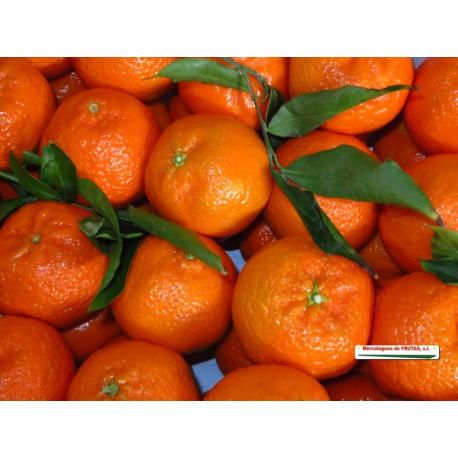 Mandarina (Kg)