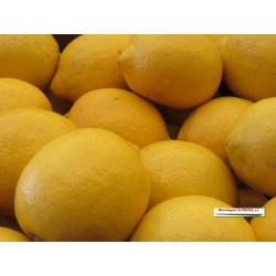 Limón (Kg)